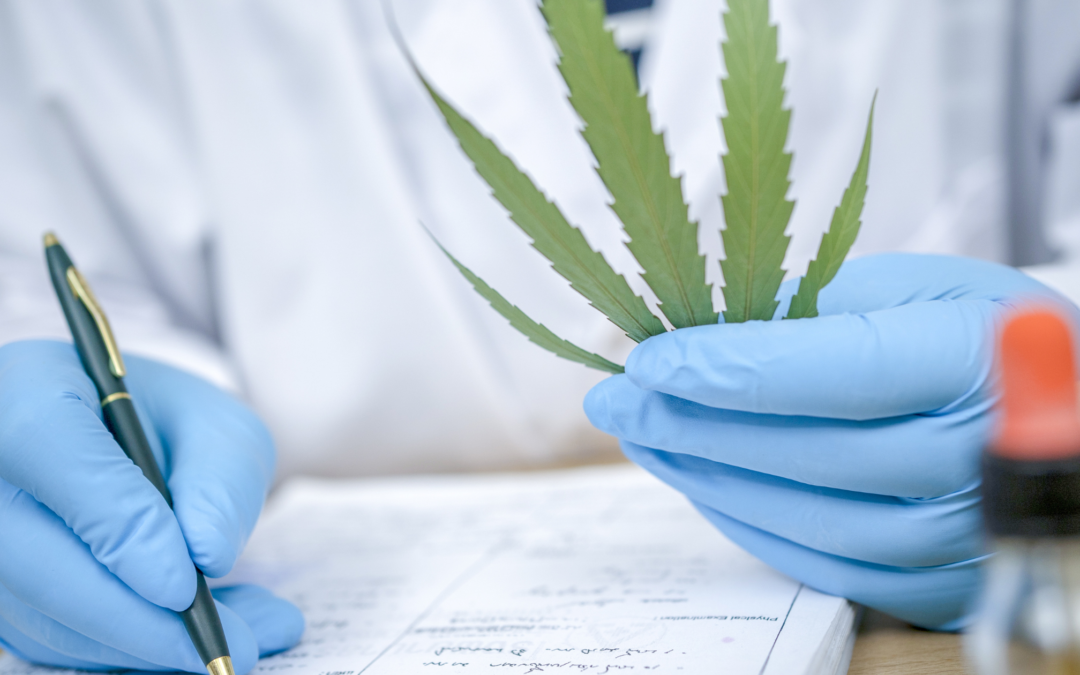 How LIMS Can Meet the Unique Needs of Cannabis Testing Labs
